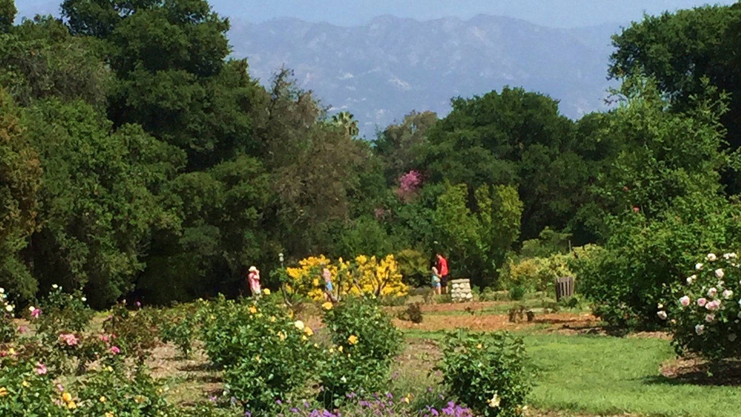 Edward Goldman recounts his refreshing visit to the beautiful Descanso Gardens this past Easter Sunday.