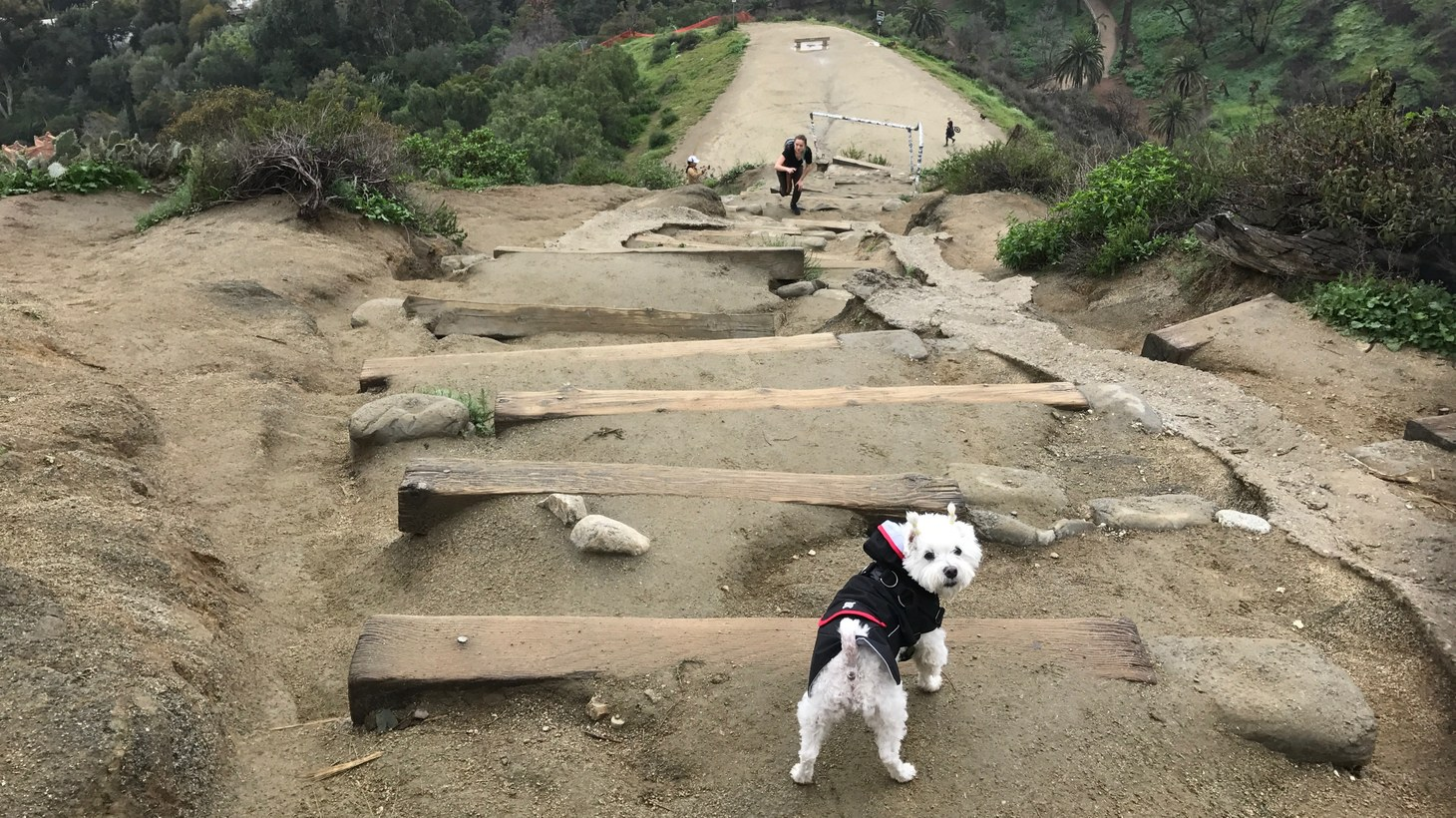 Soo Kim submitted photos of her dog Einstein for the 2019 time capsule. Here's the little guy at Runyon Canyon.