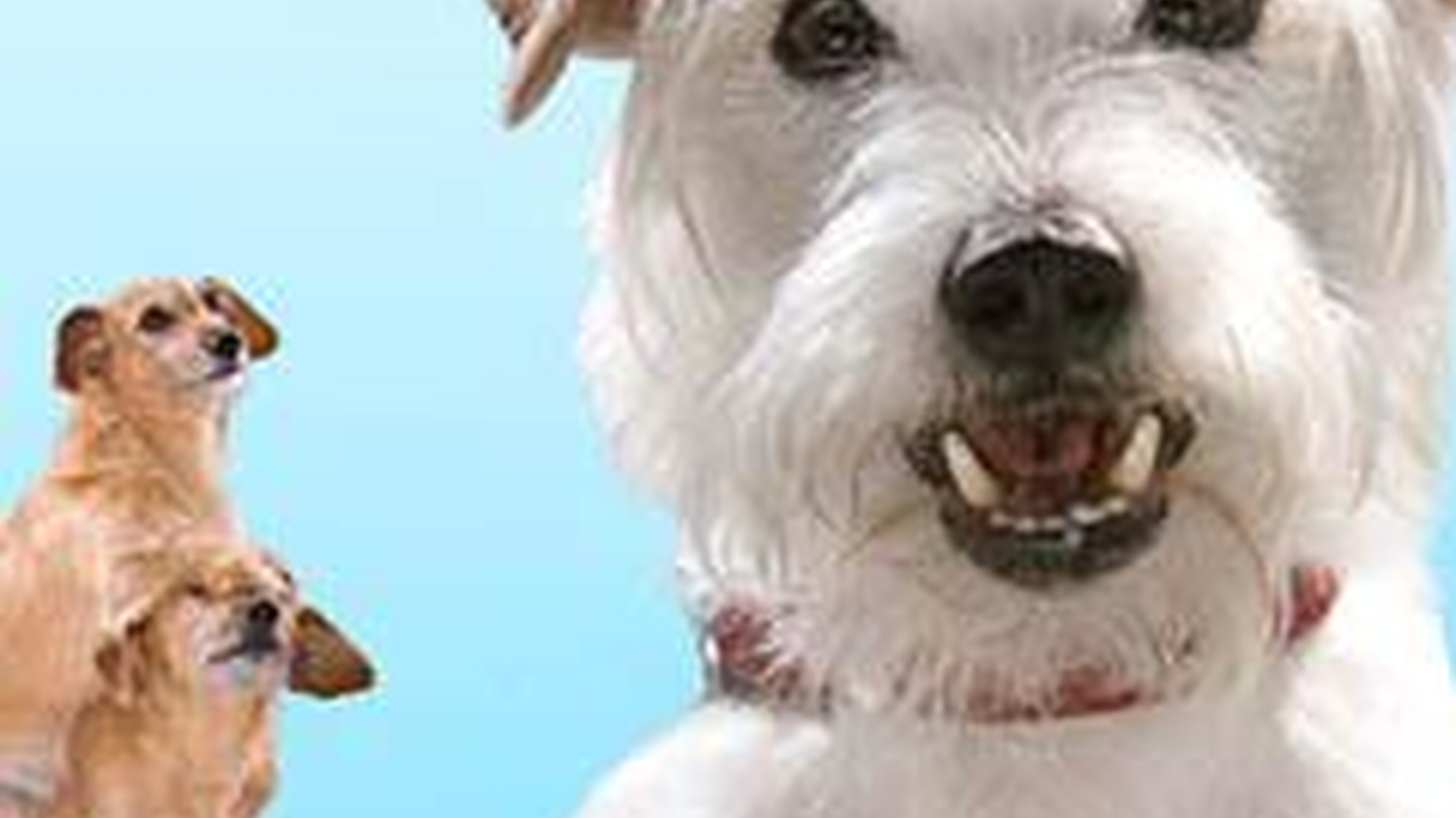 One way to see Hotel for Dogs is as a cute little family comedy that ups its cuteness quotient by multiplying its canine count…