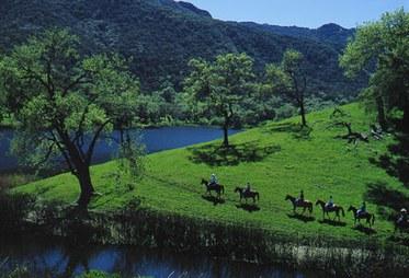 Australian Cattle Call