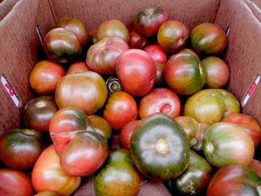 Black Brandywine Tomatoes