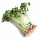 Daikon Sprouts.jpg