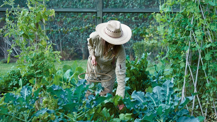 As urban gardening gains popularity, Lauri Kranz of   Edible Gardens LA  is helping novices and veterans bring edible beauty to their backyards and balconies.