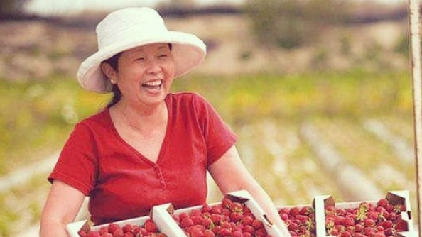 Molly Gean of Harry's Berries is a virtual celebrity of Southern California farmers' markets. She and her family ship their berries all over the world.