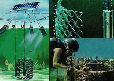 Solar Powered Oyster Reef