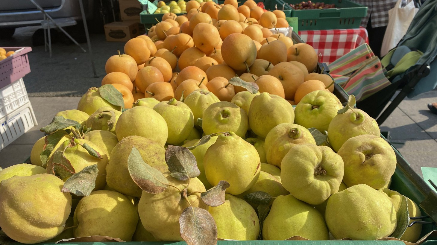 Quince most resembles an apple in flavor, but because of its high concentration of pectin, it should be cooked to soften.