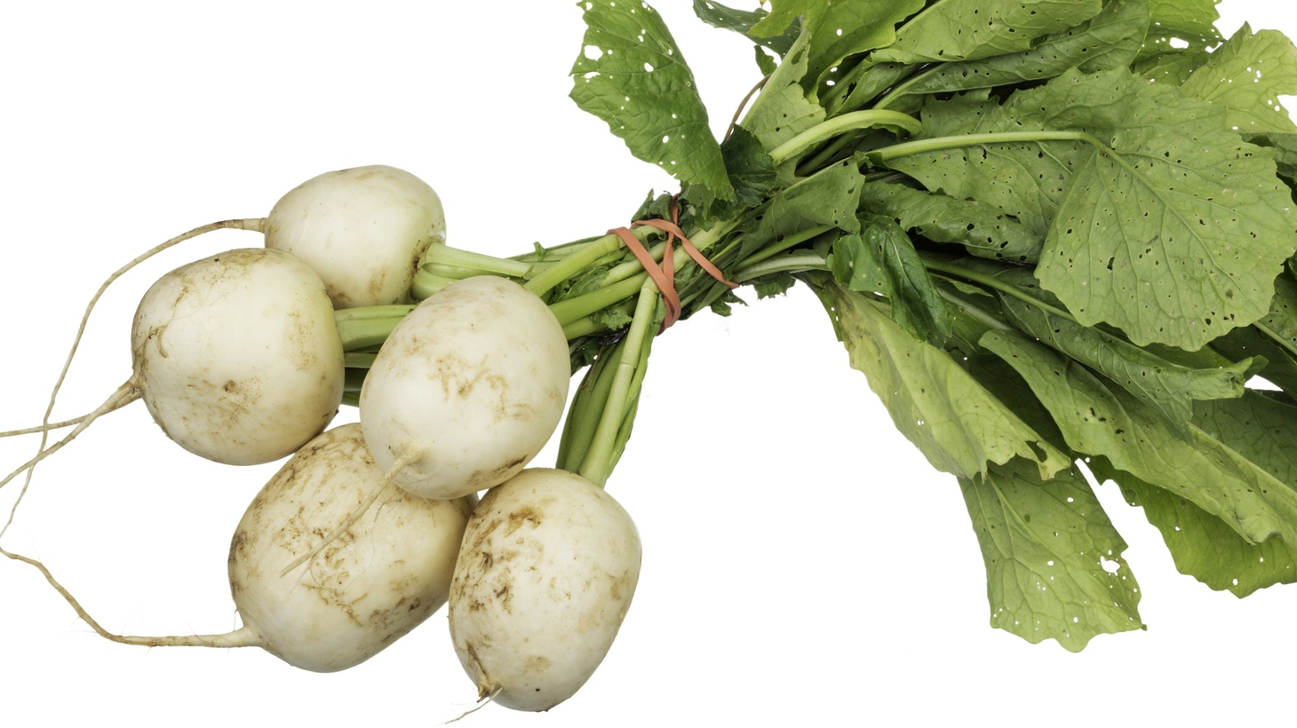 Tokyo Turnips are tender, slightly spicy and taste like a cross between a radish and a turnip.