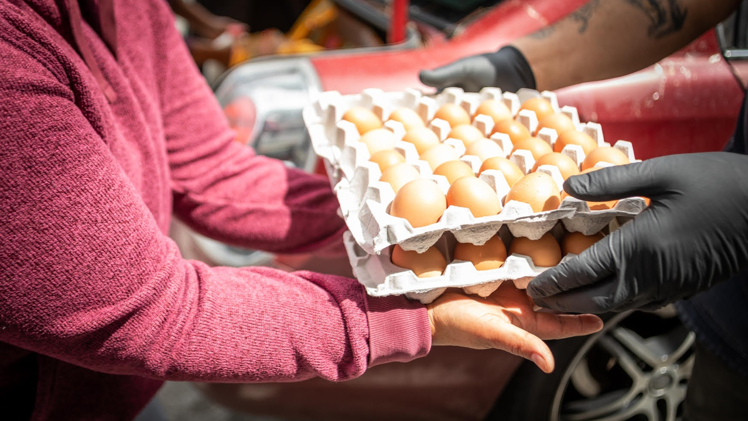 Eggs being distributed by No Us Without Them, a charity assisting undocumented workers in the restaurant industry.