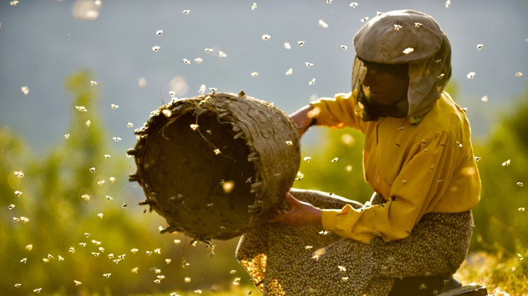 """The star of the documentary """"  Honeyland  """" is Haditze, a woman living in a remote settlement in the Macedonian mountains with her elderly mother."""