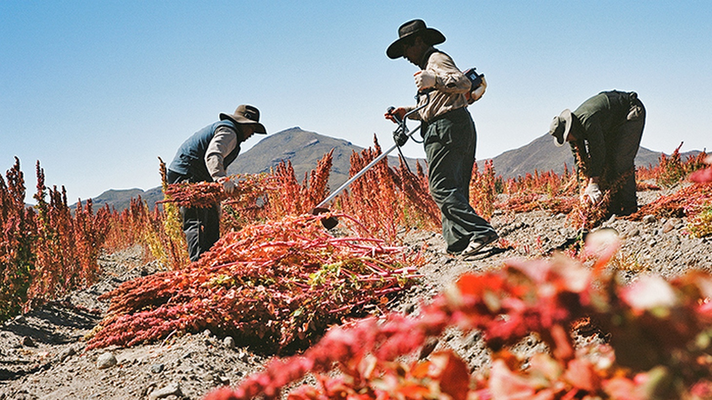 What makes an effective food trend? Lisa Hamilton tells us about the fight over quinoa in Bolivia. Plus, Jonathan Gold tries a new great spot for paella in L.A.