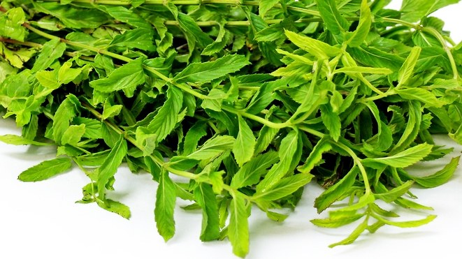 Persian mint.