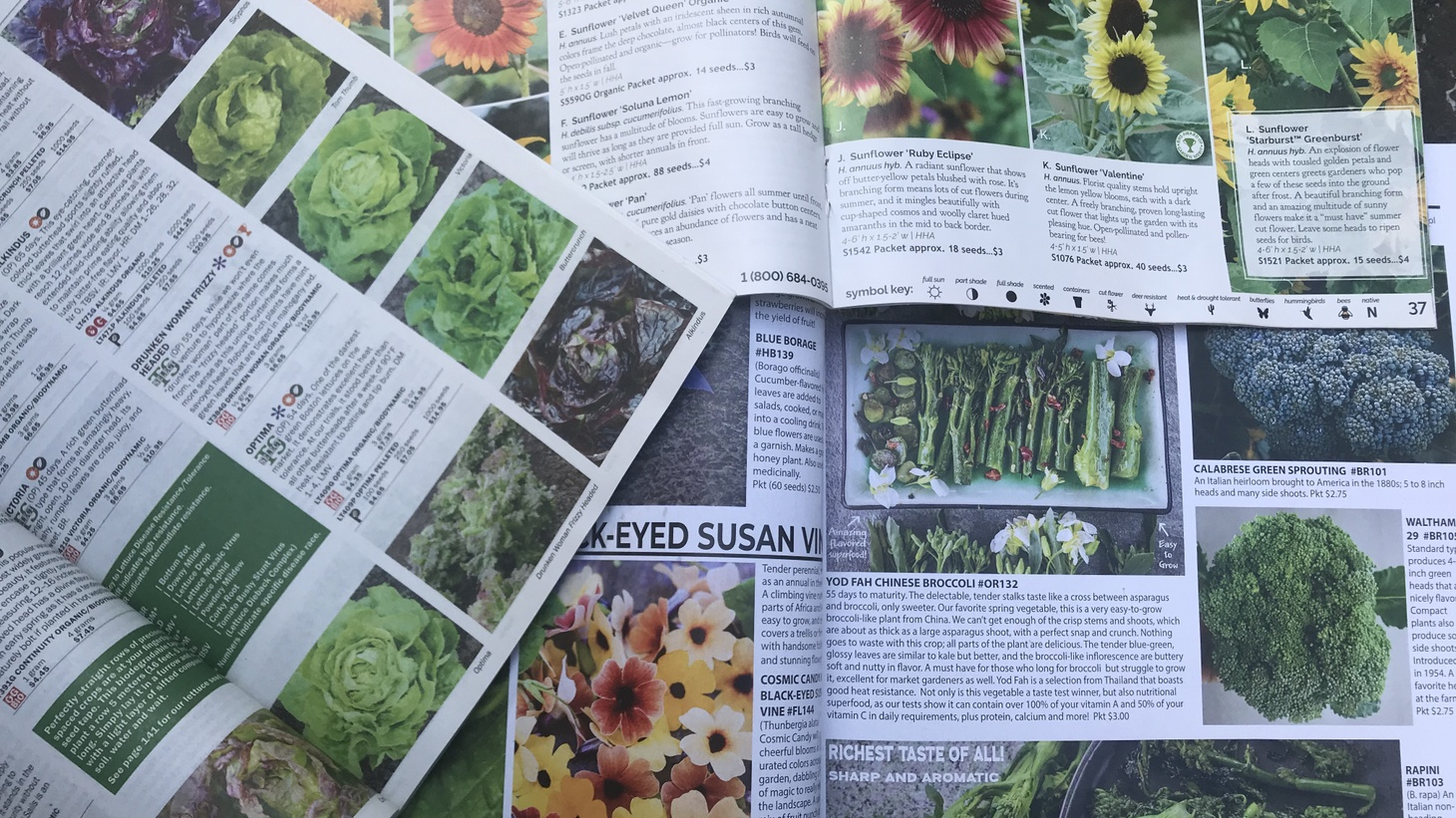 Gardener Kazi Pitelka recommends planting seeds from heirloom or hybrid varieties, which can be bought from a seed catalog for winter's leafy greens.