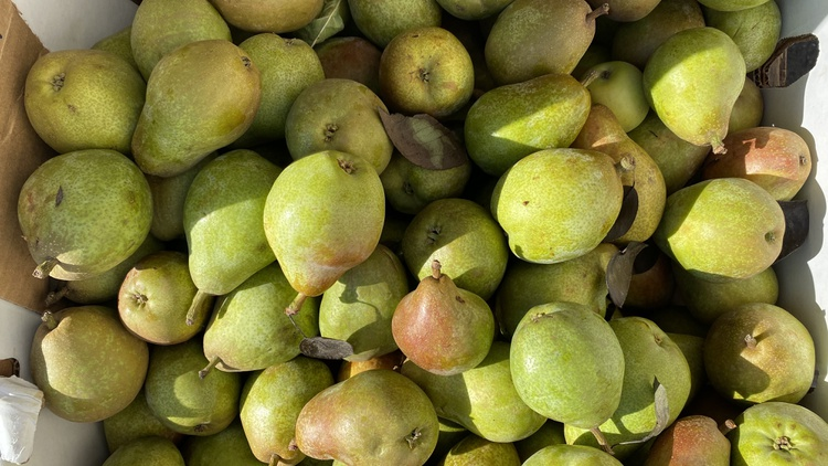 Not your average coffee bar pastry case, Chef Naomi Shim of Doubting Thomas in Historic Filipinotown is shopping for pears at the Santa Monica Farmer's Market.