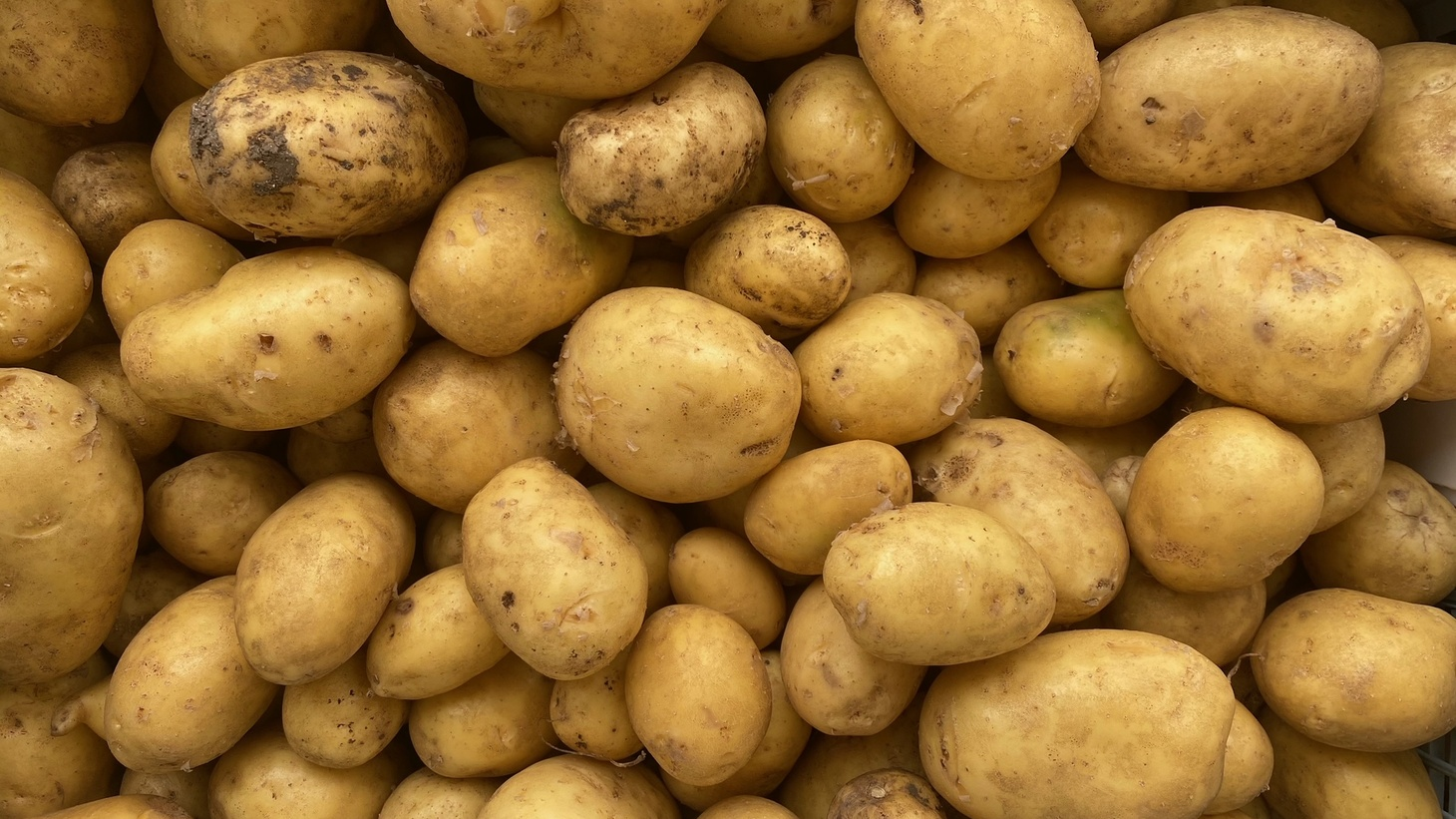 """""""Don't eat the eyes,"""" warns farmer Dawn Birch of new potatoes, as they contain a bit of arsenic."""