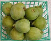 green_figs.jpg