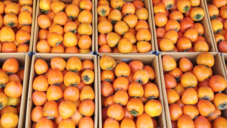 Persimmon fever has arrived at the Santa Monica Farmers Market!