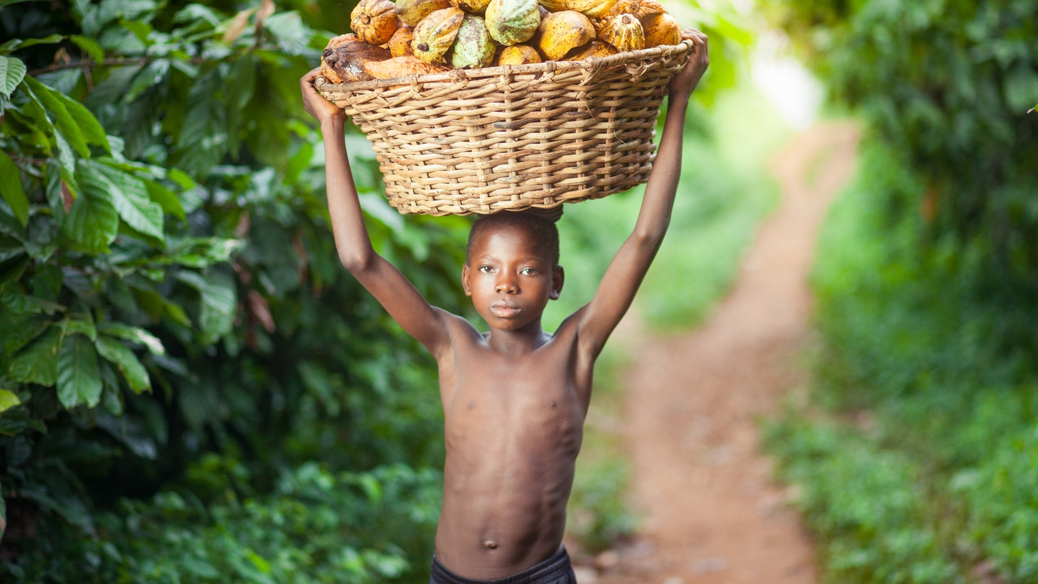 A young boy in Ghana harvests cocoa pods. The Supreme Court is poised to rule on two cases that would hold Nestlé and Cargill responsible for child labor abuses in the cocoa supply chain.