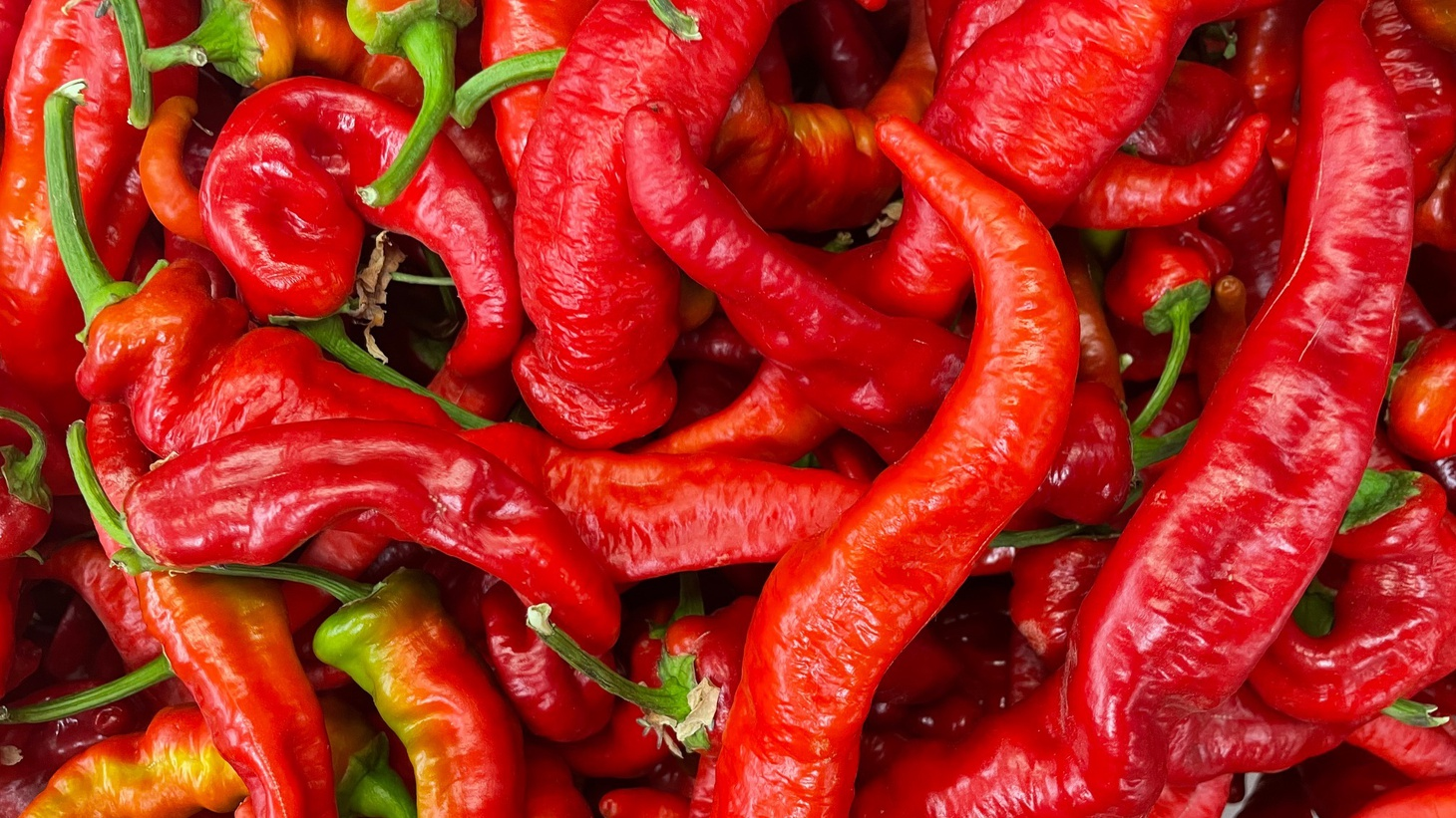 Market correspondent Gillian Ferguson discovers how Executive Chef Travis Passerotti is using sweet peppers at the Tasting Kitchen, including the Jimmy Nardello variety.