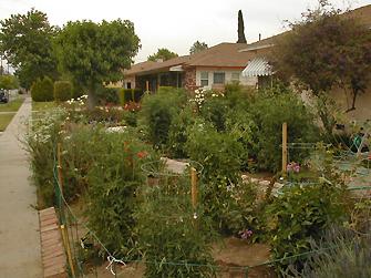 tomatoes-garden.jpg
