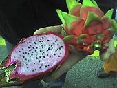 dragon_fruit.jpg