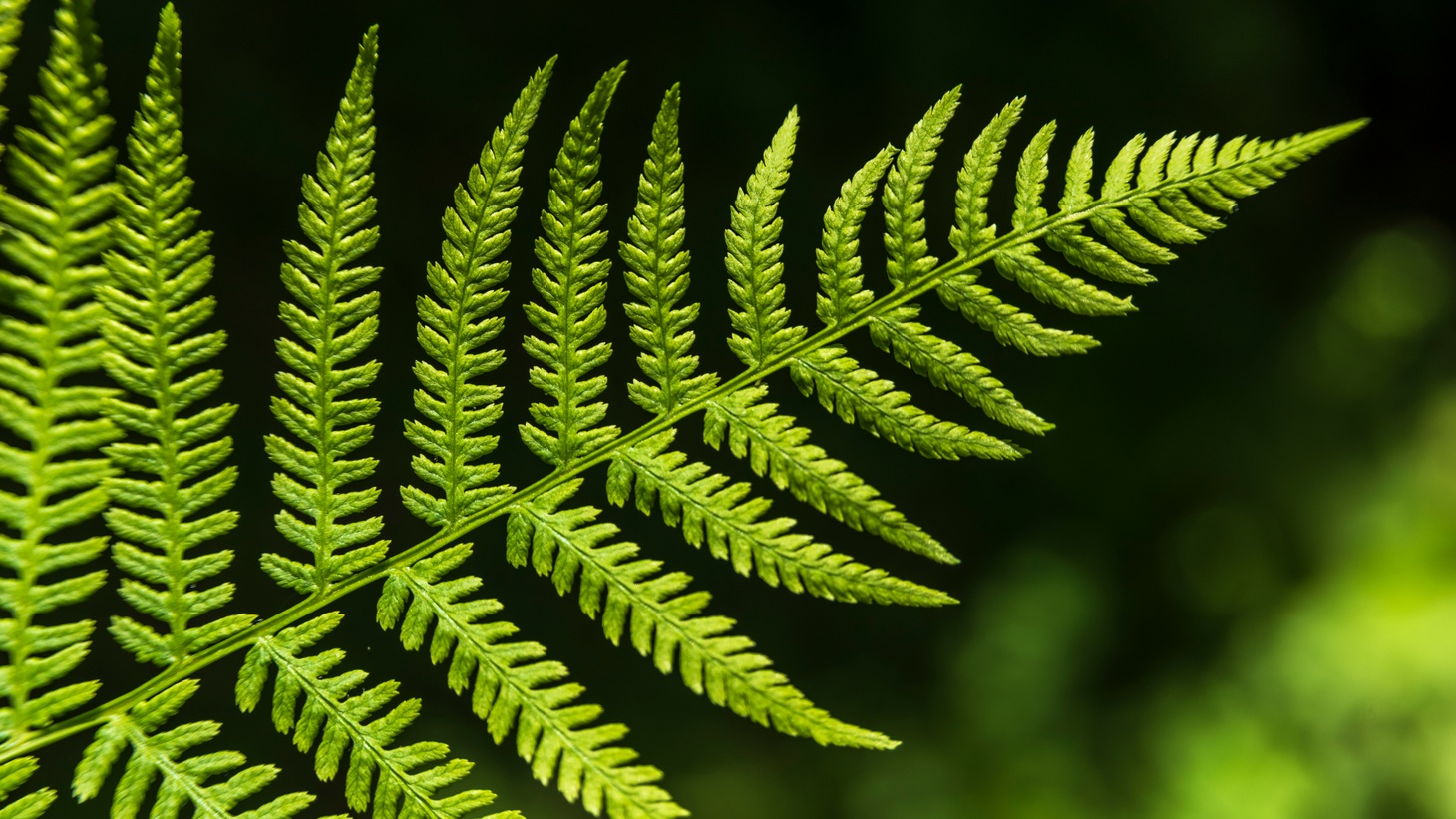 Fractal shapes in nature, from tree leaves to salt flats, affect the brain and have a soothing and calming effect, says science and nature writer Lucy Jones.