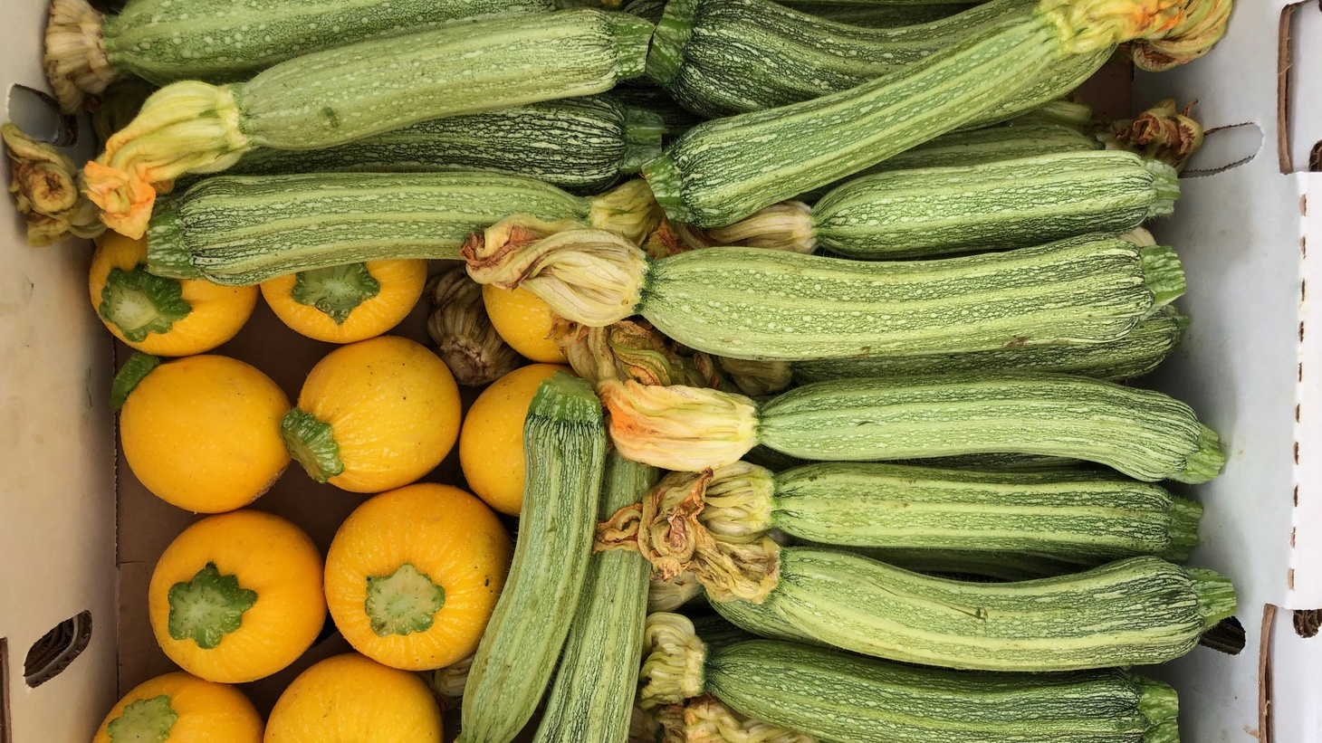 """""""The first zucchini to harvest are the biggest,'' says Barbara Whyman of Tutti Frutti Farms."""