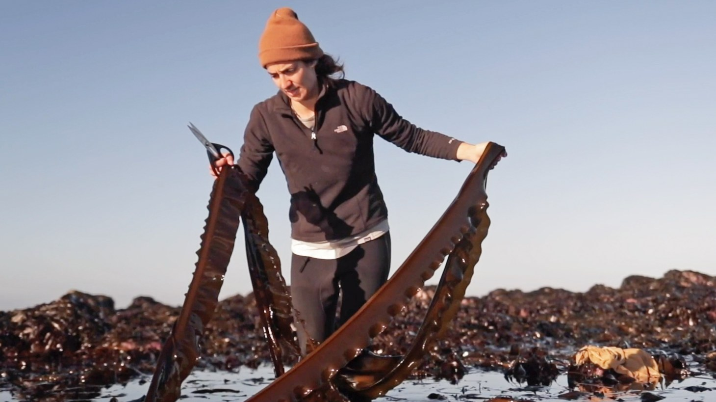 Catherine O'Hare harvesting seaweed.