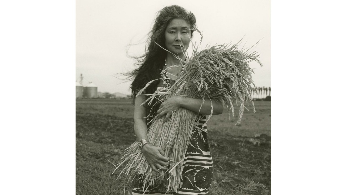 Robin Koda holds stalks of rice at Koda Farms.