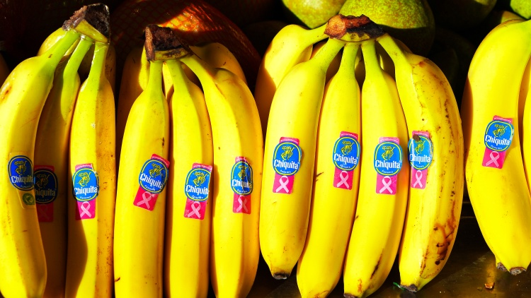 Cavendish bananas seem to be abundant in grocery stores, but a fungus has been threatening its existence for years, and saving it might become a technological endeavor.