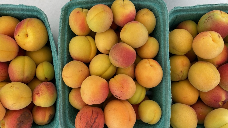 Market correspondent Gillian Ferguson catches up with Mike Cirone of See Canyon , who has a bumper crop of Blenheim apricots.