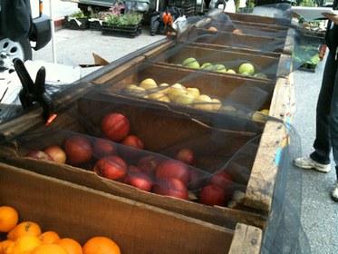 Medfly Netting on Fruit