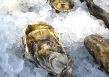 Punch Party; Tejocote; Fighting the Flu; Oysters