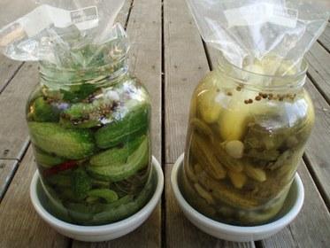 Brining Pickles
