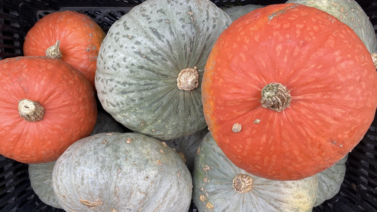 Peter Schaner of Schaner Family Farms is growing winter squashes that are available at the Santa Monica Farmer's Market.