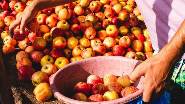 No trip to the farmers market is complete without a few apples.