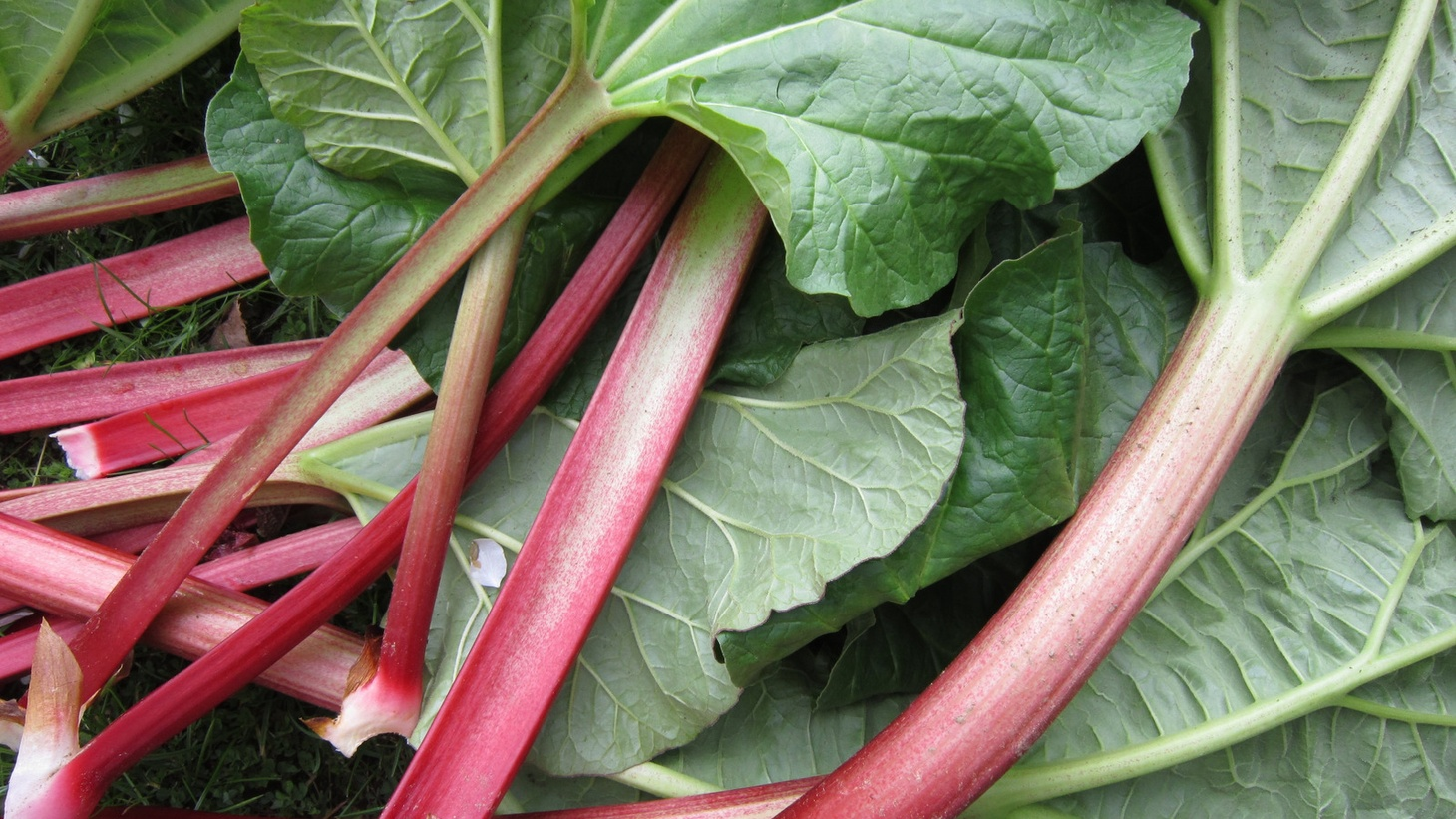 Tinky Weisblat recommends nontraditional uses for rhubarb including as a pizza topping.