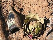 artichoke_in_landfill.jpg