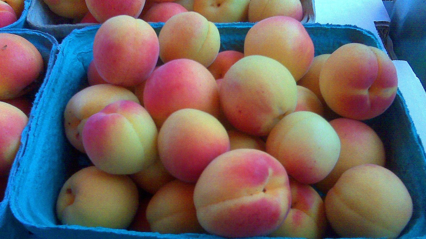 It's officially summer. In the spirit of kicking back, Good Food revisits some great segments. How French Toast can save the world, the 11 commandments of grilling, and the 5-second rule. Fact or fiction? Plus, Laura Avery finds Blenheim apricots at the Santa Monica Farmers Market.