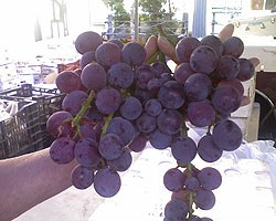 kyoto_grapes.jpg