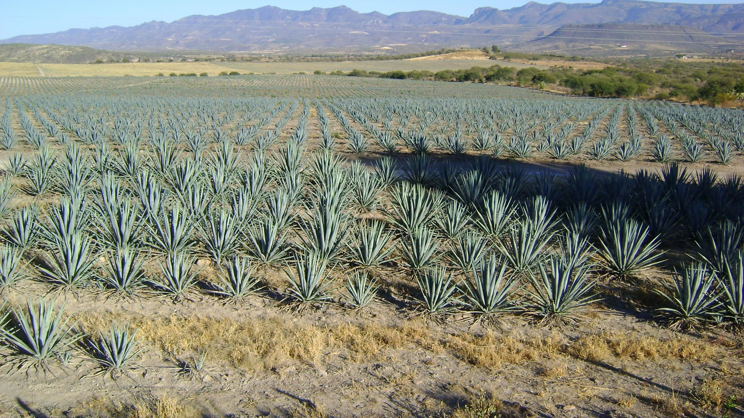 Is an agave shortage threatening tequila? How many Americans will go hungry as a result of food stamp cuts? And the FDA's proposal to ban trans fats.
