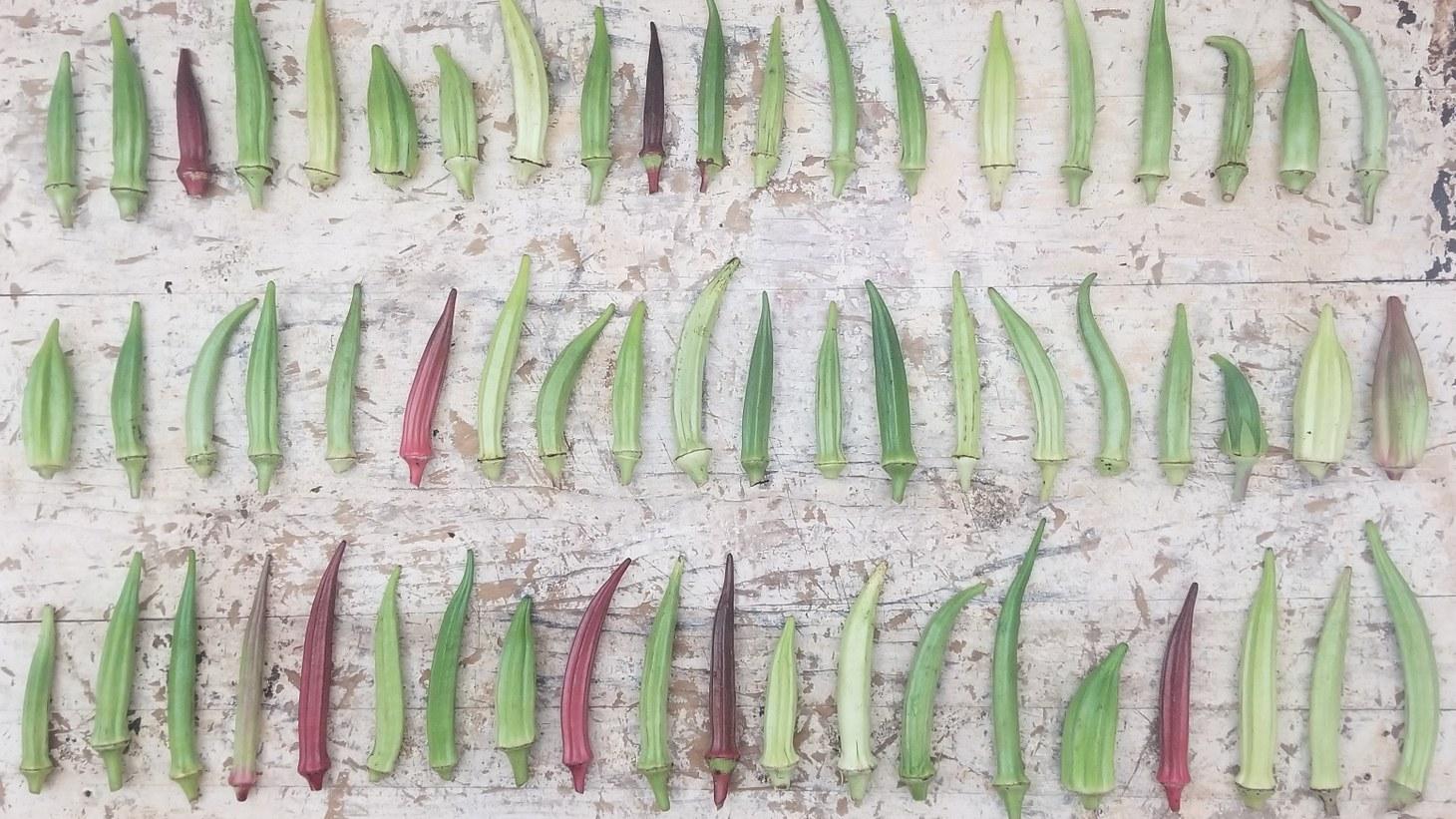 Whole okra variety.