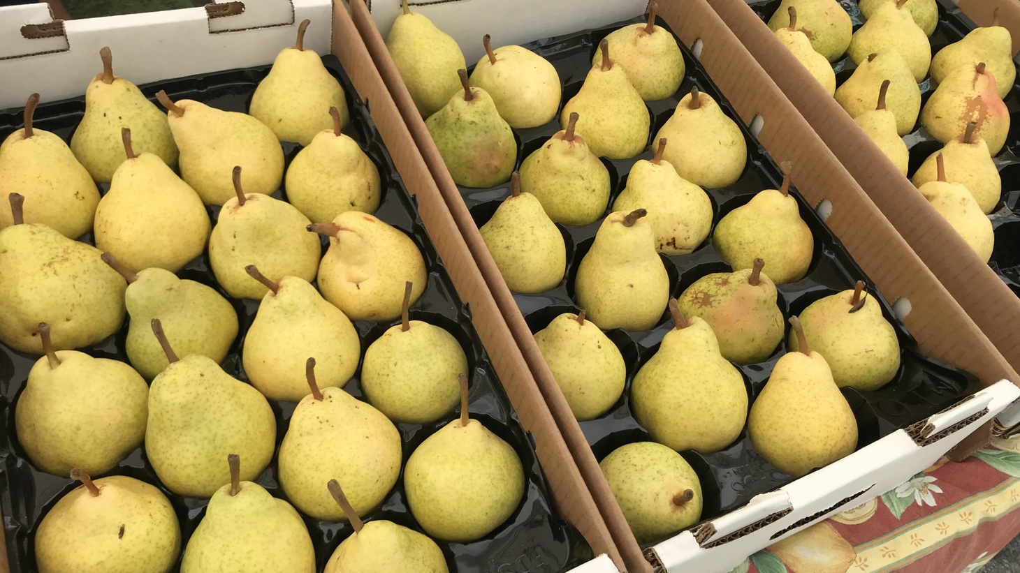 Market report pears.