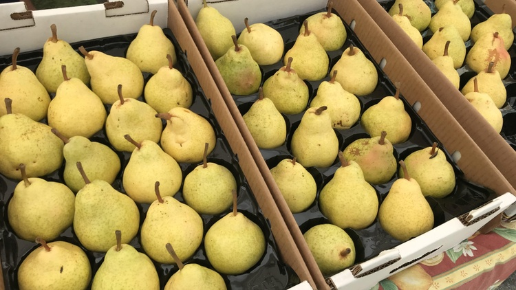 Pear season is turning all the way up at the Santa Monica Farmers Market!