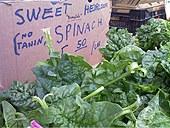 heirloom_spinach.jpg