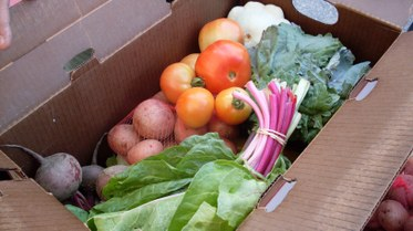 South Central Farmers' CSA Box