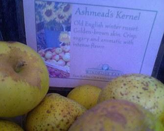 ashmeads_kernel.jpg
