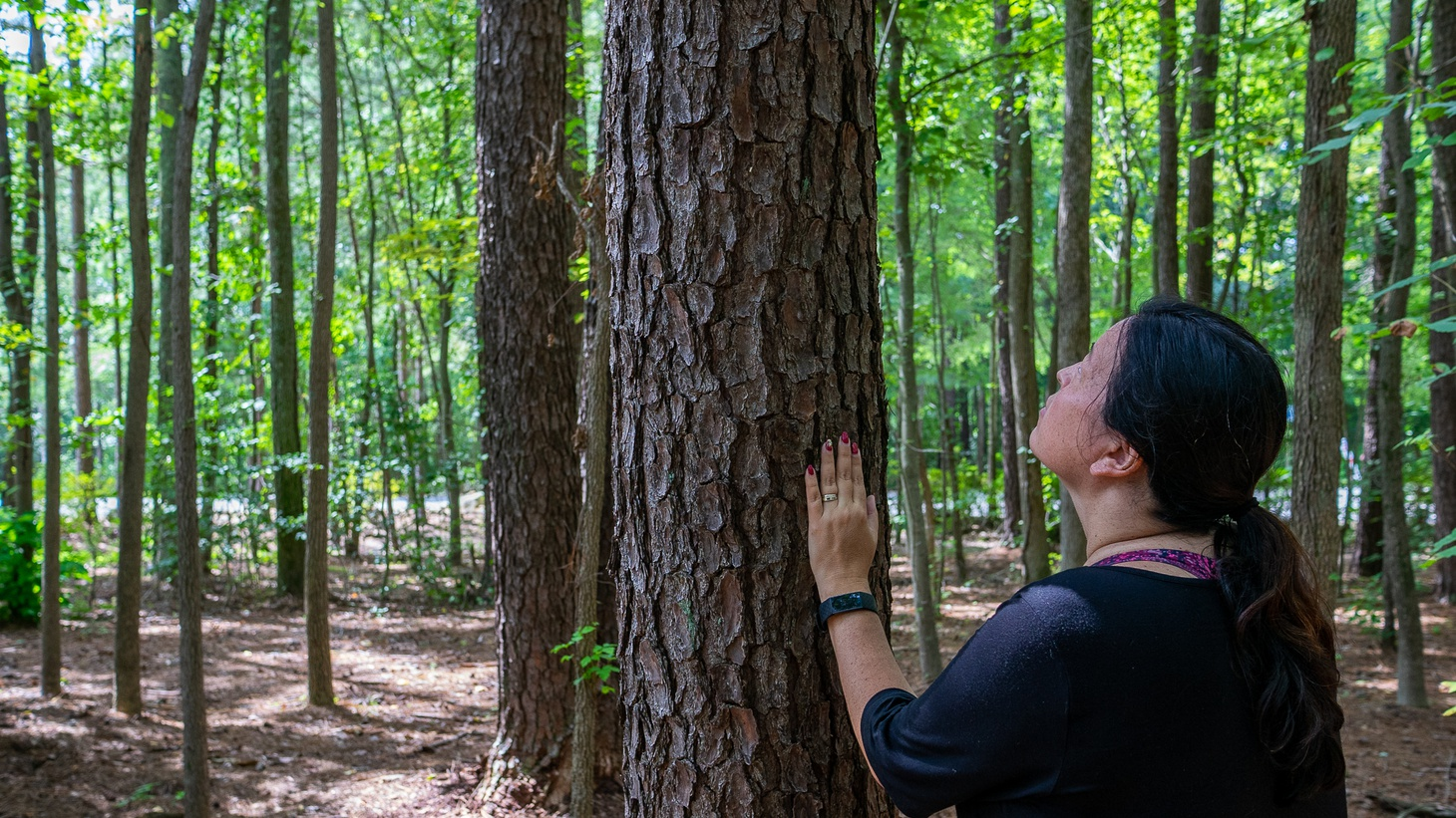 Trees have their own hidden lives, and spending time among them can greatly benefit our health.