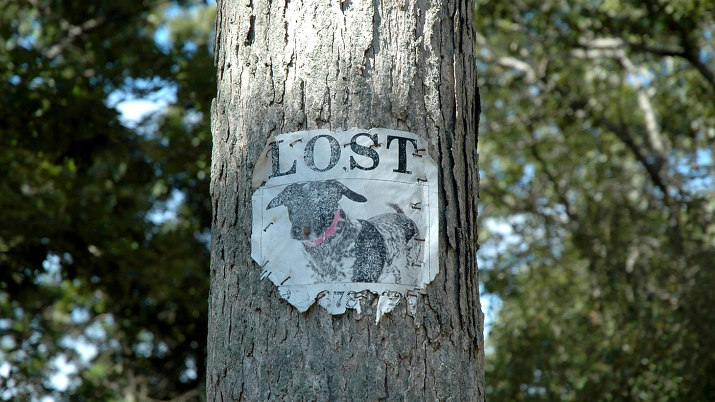 Stories of people who are lost, histories that are lost, and things that are lost.