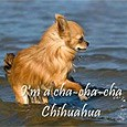 gd091014chihuahua.jpg