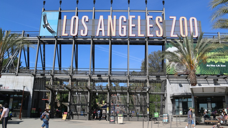The LA Zoo, which is inside Griffith Park, is involved in animal conservation, and it has helped bring back the California condor from the brink of extinction.